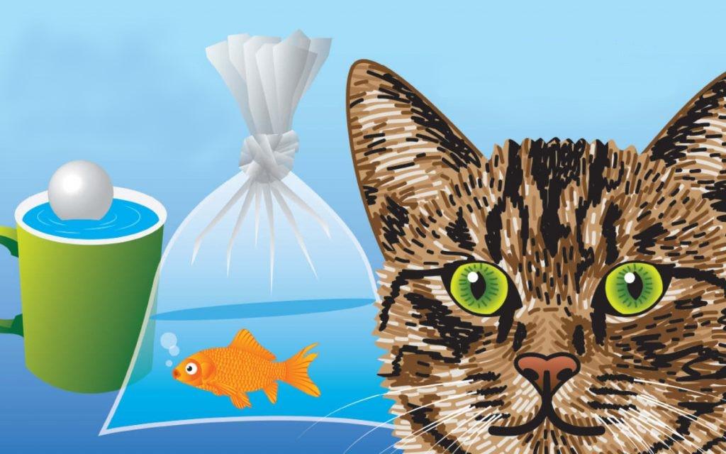 گربه در حل تمشای ماهی قرمز